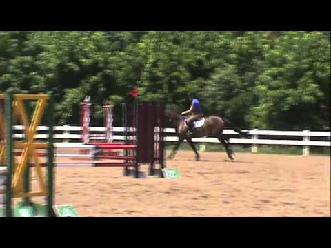 Horse for Sale – Ratatouille – 2007 bay Trakehner gelding
