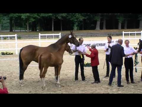 Varinello: Siegerfohlen Trakehner-Fohlenchampionat Zuchtbezirk Rheinland, Holland und Belgien 2013