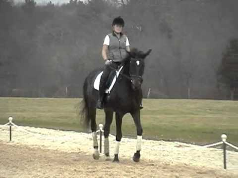 Lousiana Lee 1998 Trakehner Mare for sale