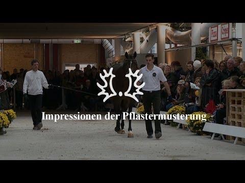 Impressionen der Pflastermusterung – Trakehner Hengstmarkt 2013