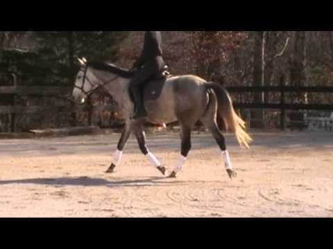 Vigilance Trakehner Mare For Sale