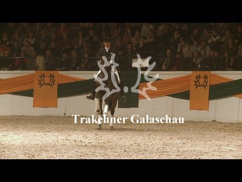Trakehner Galaschau – 51. Trakehner Hengstmarkt
