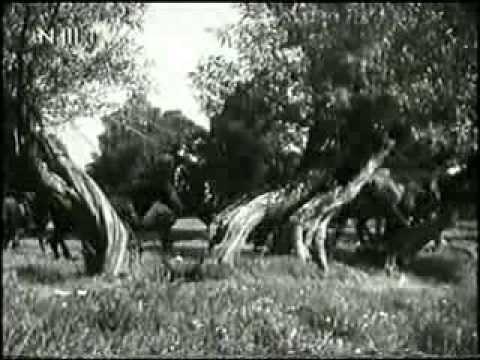 Trakehnen: Das Paradies der Pferde –  Ein UFA Kulturfilm von 1940