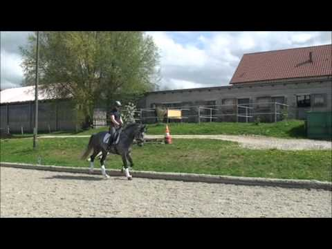 FOR SALE!!! 7-jähriger Trakehner Wallach mit TOP GGA! Normativ ox x Biotop