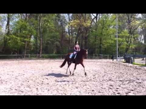 For Sale: 7-jährige Dressurstute (Trakehner) Dressurpferde M fertig