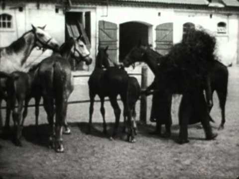 Pferdezucht in Trakehnen