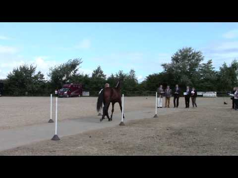 Warrawee Illusion – Trakehner Breeders Fraternity Show – 2 year old assesment – 7 September 2013