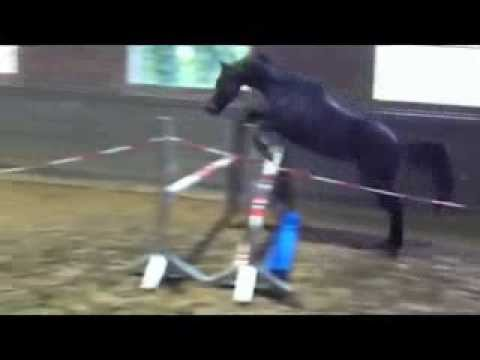 Trakehner mare Fu Long by Amatcho