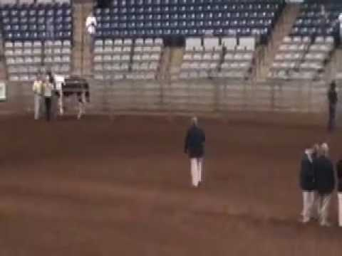 Lord Cosmo at ATA Stallion Approval1.2.10.mov