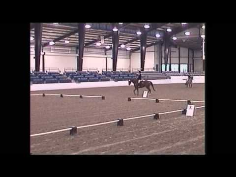For Sale Trakehner horse Idealic First Dressage Test12-6-2009 00000_2.wmv