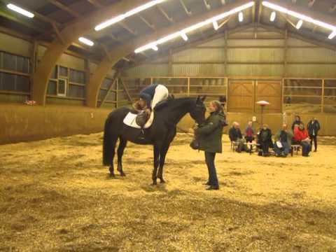 Tzigane, Trakehner stallion