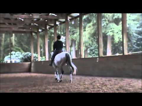 Liana – 2004 Trakehner Mare for Sale