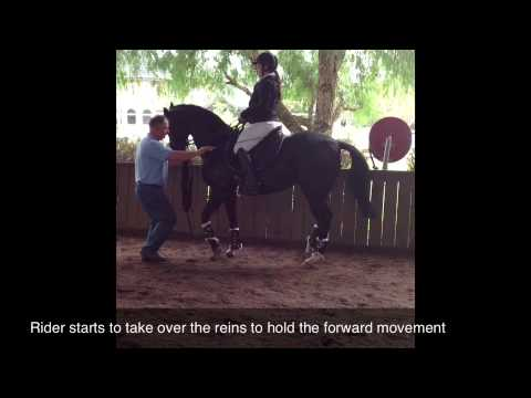 Trakehners Australia presents Piaffe and Passage Training Days 4-6 with Blas Lago