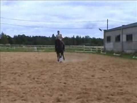 Dressage horse (Trakhener)-SOLD