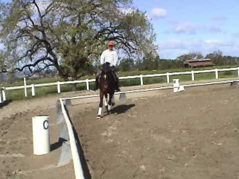 Timotheus –  1999 Approved Trakehner Stallion by EH Caprimond