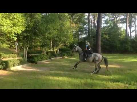 Beauty – Trakehner Mare for Sale – Cross Country Schooling at Carolina Horse Park