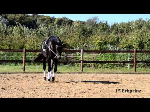 15 Erbprinz von Hirtentanz/Buddenbrock