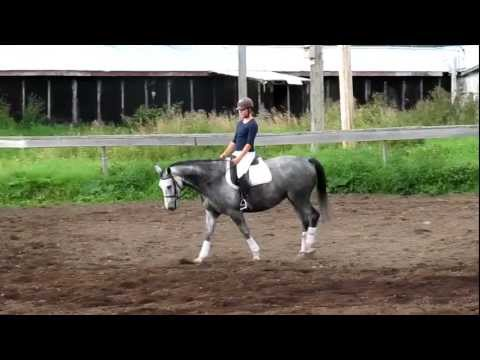 Tinkabell – Trakehner mare for Sale