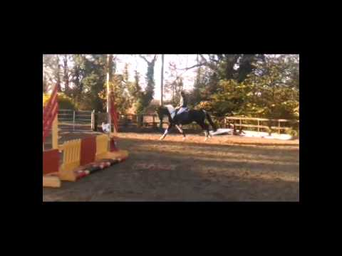 For Sale – 16.2, 6 yr old,Pure Bred Trakhener mare