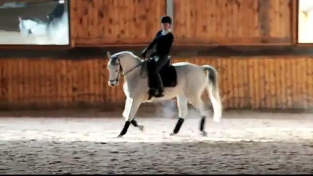 Marco; Trakehner Gelding Dressage Horse for Sale