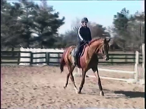 Trakehner Horse  3 years old – Horse For Sale