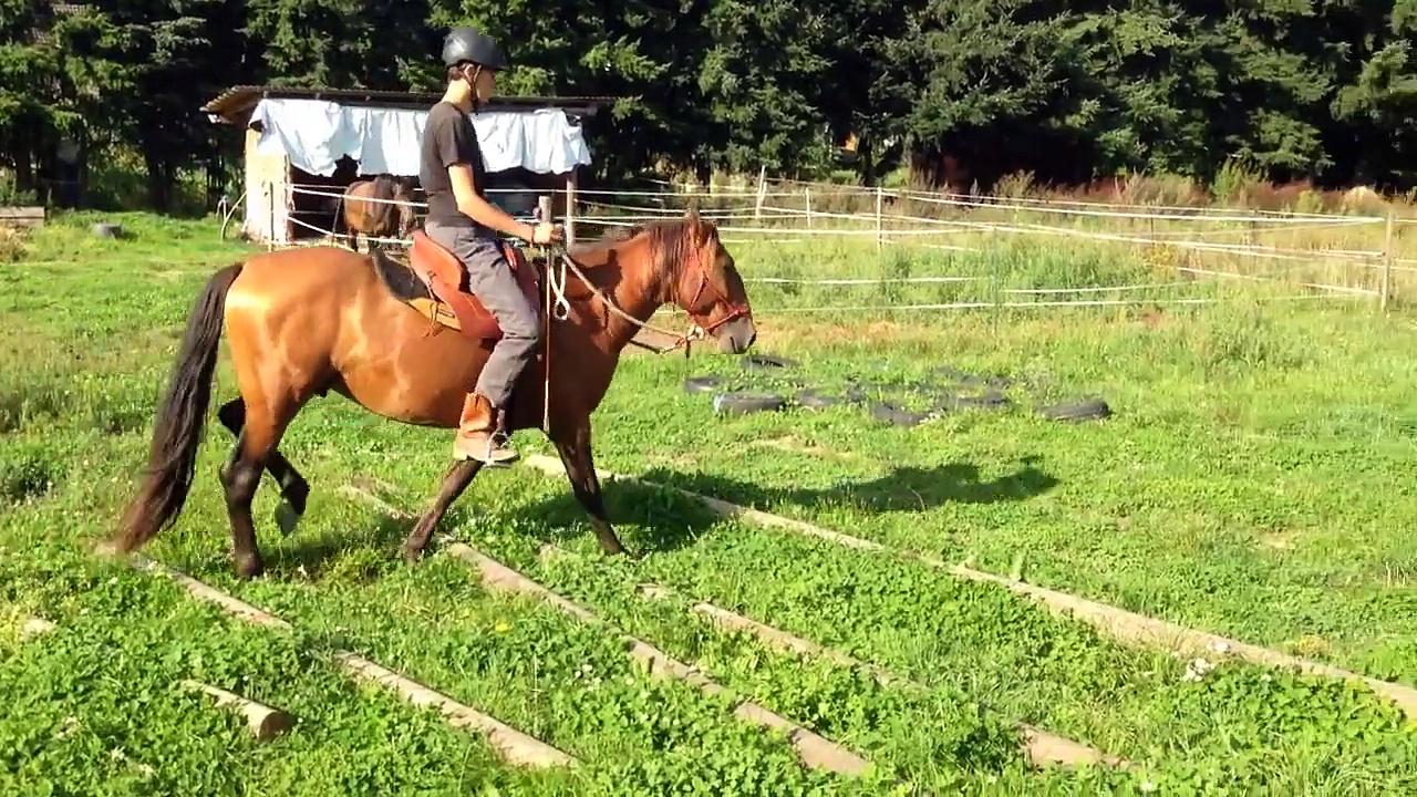 PRE Hengst Faro – Uwe Weinzierl Verkaufspferde