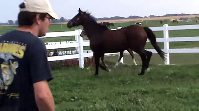 Aimee FLF – Trakehner/Arab yearling filly – For Sale 2