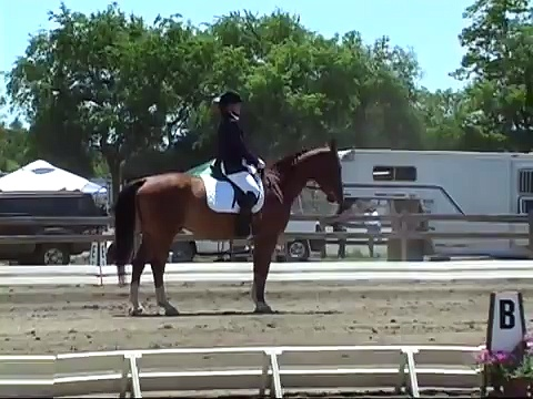 Warmblood Gelding Trakehner ~Leased~ 16.1hh 2002 Hunter Equitation Dressage *LEASED*