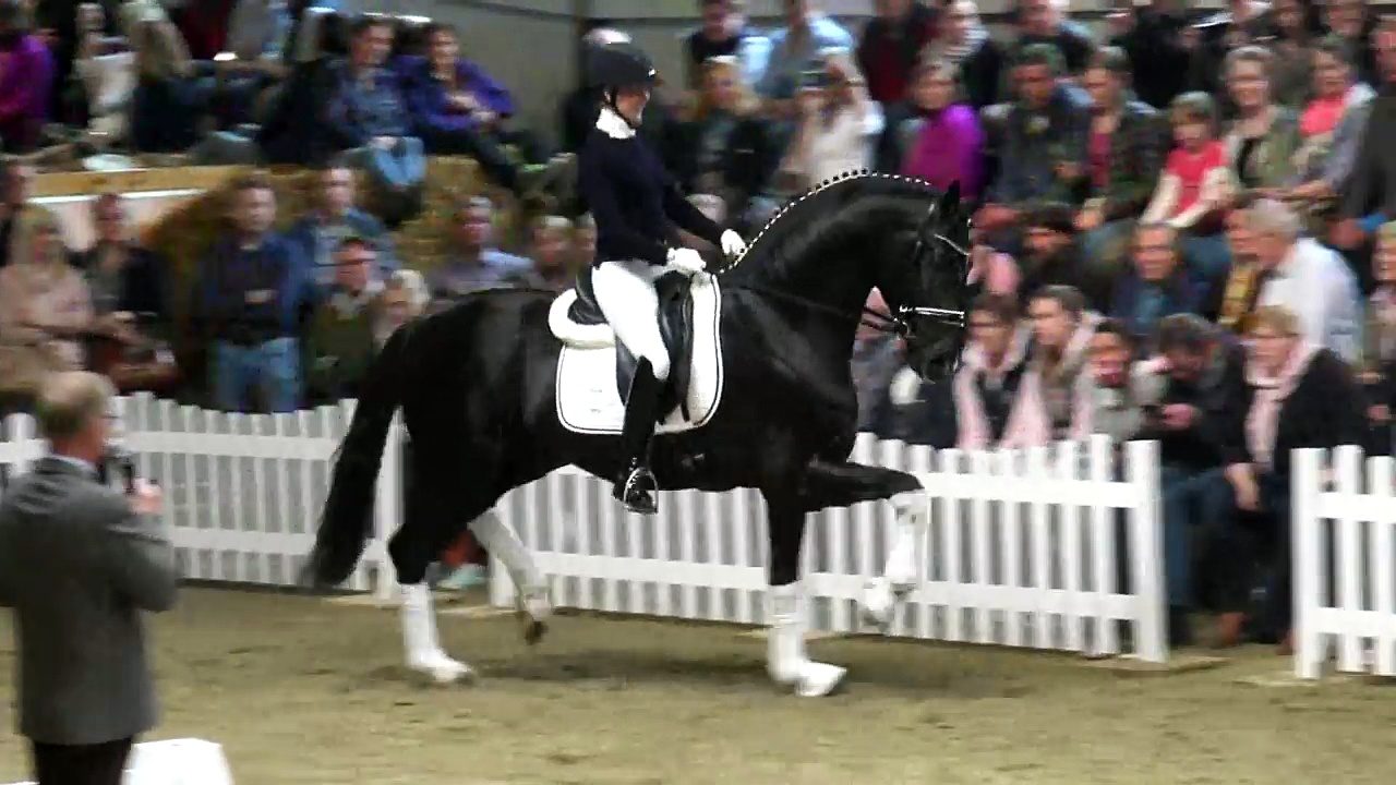 SECRET(Sezuan x St.Moritz) today at stallionshow Gestuet WM in Germany!!!!!