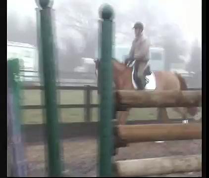 zanthos 4yro gribaldi dressage stallion